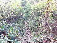 Wixen Im Unterbacher Wald