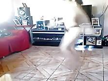 Free Porn Videos - Stiffia