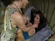 Ts Stefani Special 02