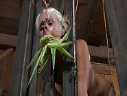 Kinky Cowboy Examines Pussy Of Tied Up Whore Sophie