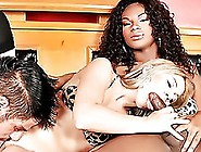 This Hot Tranny/wife/husband Orgy Will Melt Your Brain