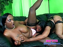 Chubby Black Lesbians Like To Eat The Pussy
