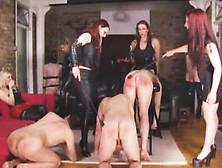 elite pain bondage pornhub - free