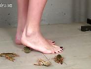 Irene (Russia)-Barefoot Crawadads