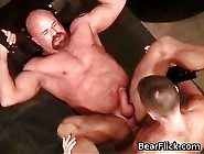 Buff Gay Bear Getting Fucked Hard In The Ass