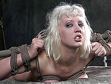 Woman In Bondage Opens Her Mouth For A Stallion's Erected Dong